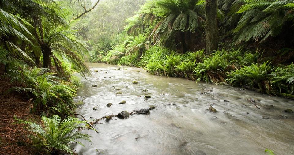 Macks Creek